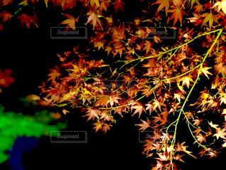 近くの植物のアップの写真・画像素材[1653191]