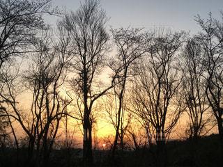 公園,夕日,夕焼け,遠景,ロング,木の並び