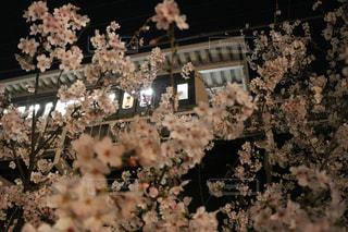 自然,花,桜,屋外,ピンク,電車,中目黒