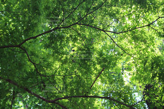 フォレスト内のツリーの写真・画像素材[1157570]