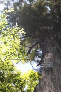近くの木のアップの写真・画像素材[1157592]