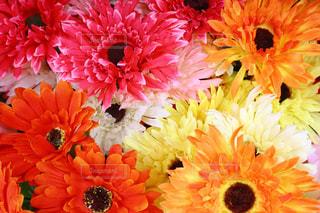 花の俯瞰ショットの写真・画像素材[1043631]