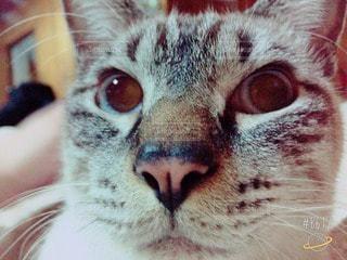 猫の写真・画像素材[46686]
