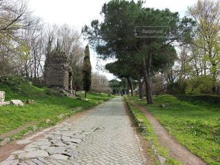 ローマ郊外 アッピア旧街道の写真・画像素材[1020010]