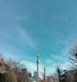 浅草から見たスカイツリーの写真・画像素材[1099473]