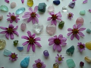 花と石の写真・画像素材[1556687]