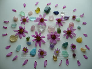 花と石2の写真・画像素材[1556691]
