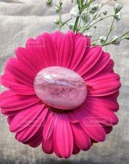 花のクローズアップの写真・画像素材[2127943]