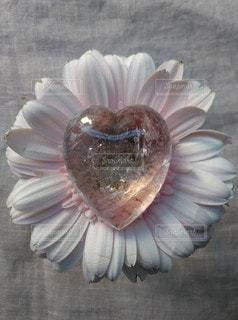 花のクローズアップの写真・画像素材[2128525]