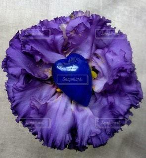 紫色の花と青のハートの写真・画像素材[2288087]