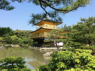 翠の中の金閣寺の写真・画像素材[1157673]