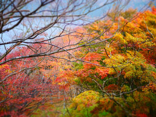 近くの木のアップの写真・画像素材[1022891]
