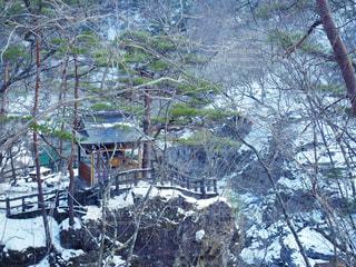 フォレスト内のツリー - No.1025775