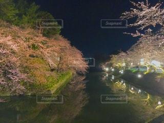 自然,花,春,桜,木,屋外,川,水面,花見,満開,樹木,お花見,イベント,草木