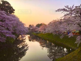 風景,空,花,春,桜,木,屋外,朝日,水面,花見,景色,樹木,お花見,イベント,草木