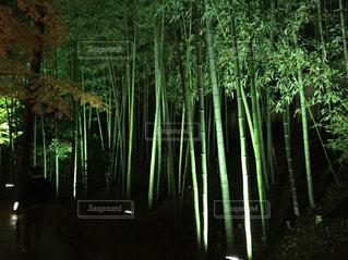 夜の竹林の写真・画像素材[1024483]