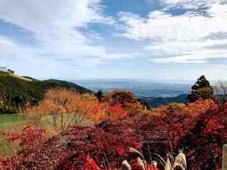 自然,紅葉,景色,ライフスタイル,秋空,眺め