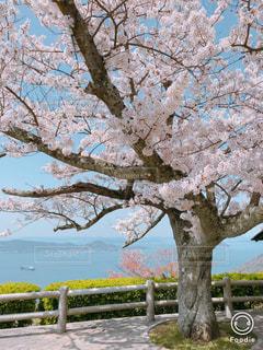 自然,風景,空,公園,春,桜,屋外,瀬戸内海,瀬戸内,草木,屋島