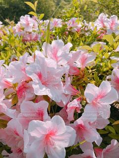 近くの花のアップの写真・画像素材[1152885]