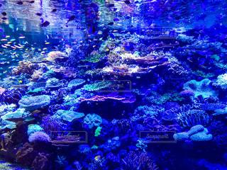 サンゴの水中ビューの写真・画像素材[1027215]