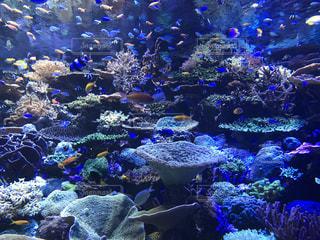熱帯魚の写真・画像素材[1316238]