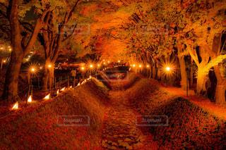 秋,紅葉,カラフル,もみじ,鮮やか,旅行,山梨県,11月,フォトジェニック,もみじ回廊