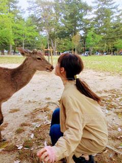 奈良公園の鹿の写真・画像素材[1026418]