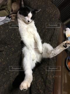 白い面の上に座って猫の写真・画像素材[1067579]
