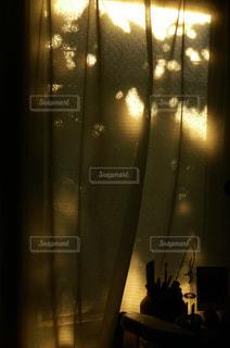 鏡の前で座っている猫の写真・画像素材[1028402]