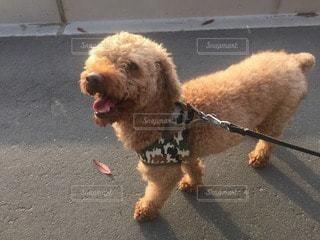 犬の写真・画像素材[34524]