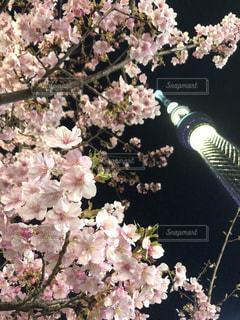 近くの花のアップの写真・画像素材[1028885]