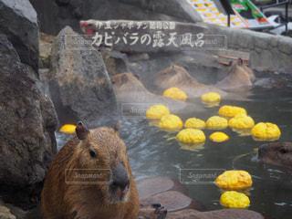 近くに動物のアップの写真・画像素材[1028890]