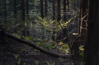 フォレスト内のツリーの写真・画像素材[1168182]