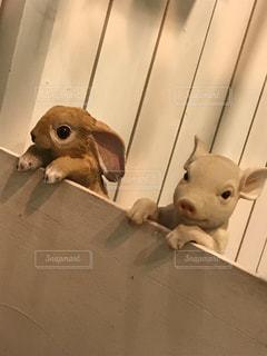 ケージの中の小さな動物の写真・画像素材[3363497]