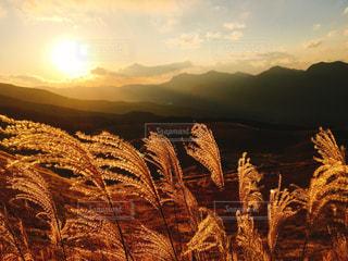 空,夕日,夕暮れ,オレンジ,ススキ,黄金色,曽爾高原