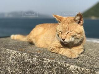 瀬戸内の佐柳島の猫達ですの写真・画像素材[1042577]