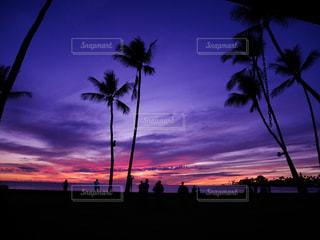 背景の夕日とツリーの写真・画像素材[1030346]