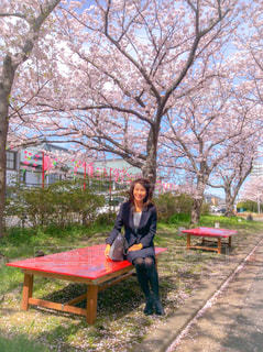 女性,花,春,桜,屋外,花見,お花見,人物,スーツ