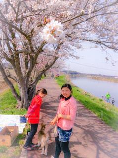 女性,犬,自然,花,春,桜,屋外,川,花見,女子,女の子,お花見,ピクニック,人物,子犬,お散歩