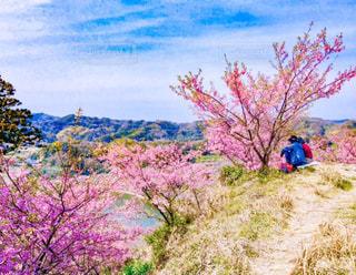 自然,花,春,桜,屋外,湖,花見,山,お花見,ピクニック,河津桜