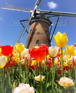 チューリップと風車の写真・画像素材[2048935]