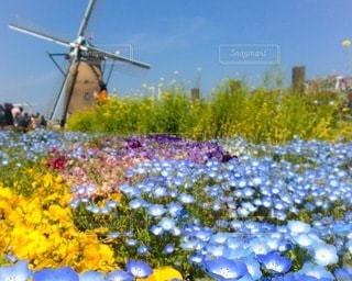 風車と花の写真・画像素材[3339335]
