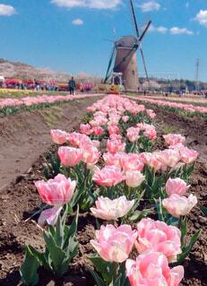 花のクローズアップの写真・画像素材[4233039]