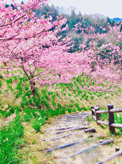 桜と階段の写真・画像素材[4233042]