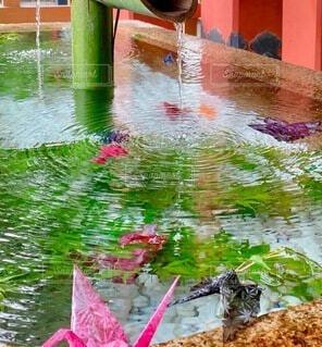 竹から流れる水の写真・画像素材[4715757]