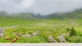 自然,風景,空,屋外,霧,景色,草