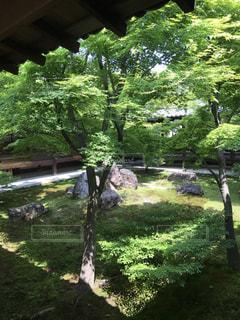 新緑の季節の写真・画像素材[1157730]