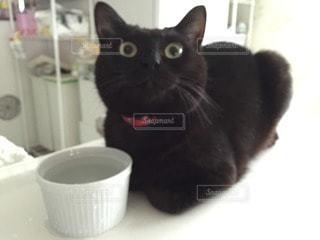 黒猫 - No.12307