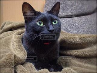 黒猫 - No.12309