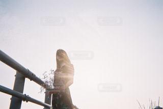 空を飛んでいる鳥の写真・画像素材[1234032]